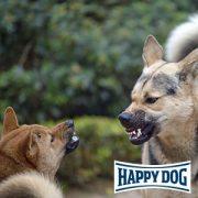 Vortrag bei Happy Dog: Aggressive Hunde