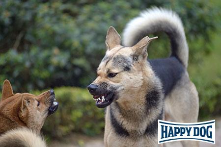 Happy Dog-Vortrag: Aggressive Hunde