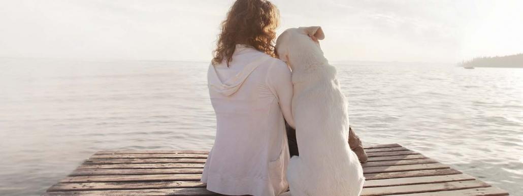 Analogien im Sozialverhalten zwischen Mensch und Hund - Hund sitzt mit Hund am Steg