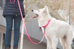 Lisas Blog Hundetrainer werden Aufträge als Hundetrainer