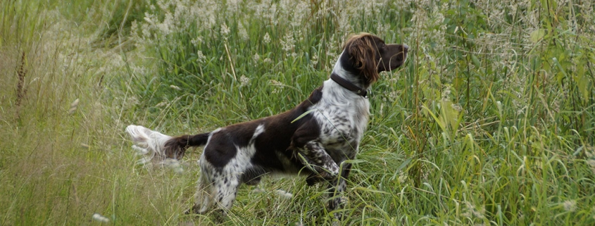 Blogbeitrag: Jagdhunde