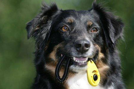 Clickertraining Hund mit Clicker
