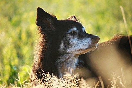 Der Hund im Alter: Seminar mit Bernd Schröder