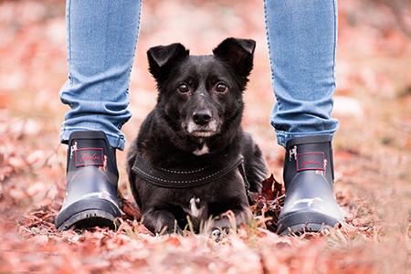 Der Spiegel am anderen Ende der Leine - Stimmungsübertragung in der Mensch-Hund-Beziehung mit Iris Schöberl