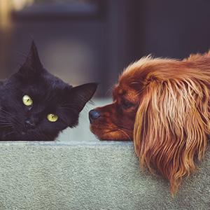 Kate Kitchenham zu Gast bei Ziemer & Falke: Der soziale Hund