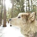 Die Hintergründe der Beziehung von Mensch und Hund mit Prof. Dr. Kurt M. Kotrschal
