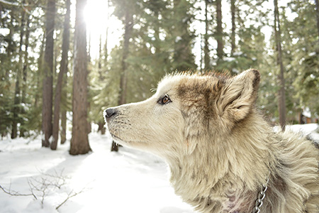 Seminar mit Prof. Dr. Kurt M. Kotrschal: Die Hintergründe der Beziehung von Mensch und Hund