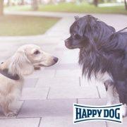 Entspannte Hundebegegnungen - Profiseminar von Happy Dog