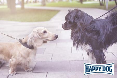 Profi-Seminar von Happy Dog mit Kristina Ziemer-Falke: Entspannte Hundebegegnungen