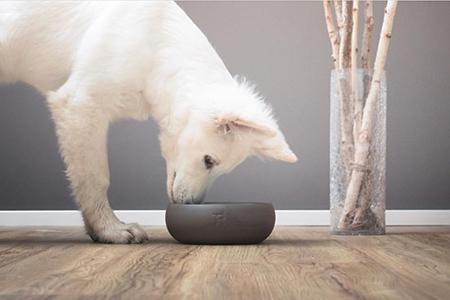 Dr. Bernd Schröder: Ernährung und Einfluss auf das Verhalten beim Hund