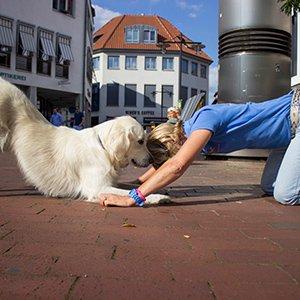 Fit&Trick-Fitness für Mensch und Hund: ein Workshop mit Simone Isenberg