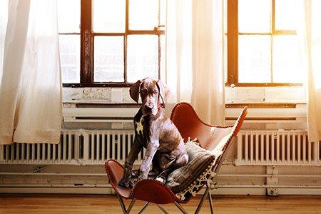 Seminar mit Kate Kitchenham: Forschung trifft Hund - wie gut kennt Dich Dein Hund?