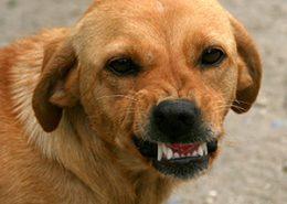 Gefährliche Hunde: Seminar mit Dr. Feddersen-Petersen