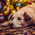 Seminar: Gelassener Hund - auch an Silvester