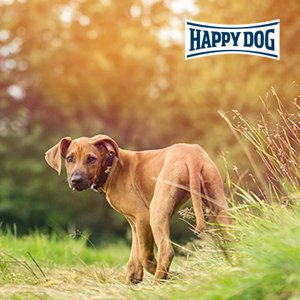 Happy Dog Profiseminar - nonverbale Kommunikation