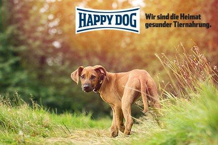 Happy Dog Profiseminar - nonverbale Kommunikation