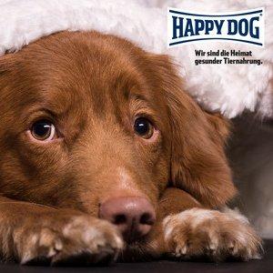Happ Dog Profiseminar - trennungsbedingte Störung