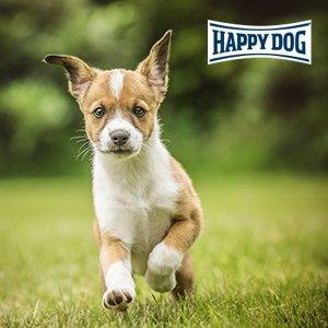 Happ Dog Profiseminar Welpenentwicklung Welpe auf Wiese