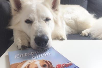 Hund-entspannt-allein