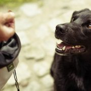 Hundetrainer-online