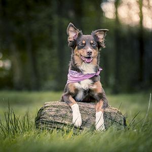 Seminar bei Ziemer & Falke: Imitationslernen beim Hund