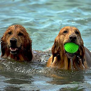 Workshop bei Ziemer & Falke: (Jagd-) Hunde richtig auslasten