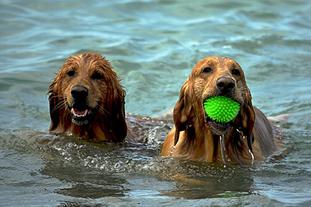 2Tage-Workshop mit Melanie Kunkel: (Jagd-) Hunde richtig auslasten