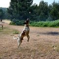 Vortrag bei Ziemer & Falke: (Jagd-) Hunde richtig auslasten
