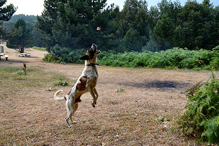 Vortrag mit mit Melanie Kunkel: (Jagd-) Hunde richtig auslasten