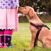 Kind und Hund - gemeinsam zum DreamTeam
