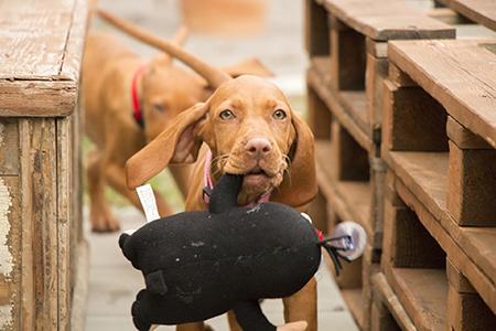 Kate Kitchenham bei Ziemer & Falke: Kluger Hund-Seminar