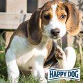 Vortrag bei Happy Dog: Stress beim Hund