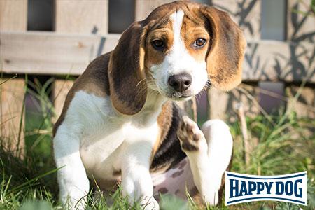 Happy Dog-Vortrag: Stress beim Hund