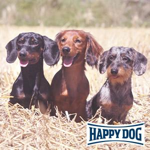 Mehrhundehaltung für Fortgeschrittene - eine Happy Dog-Profiseminar