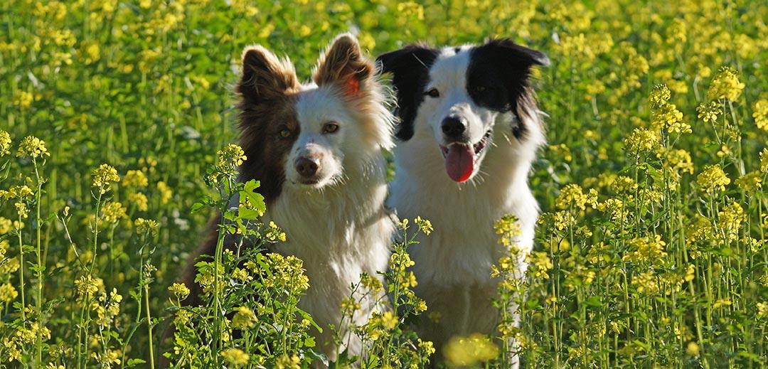 Melanie Wichmann Startbild Hunde