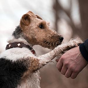 Seminar bei Z&F: Mensch-Hund-Bindung gestalten