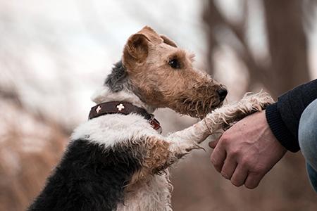 Seminar mit Mirjam Cordt: Mensch-Hund-Bindung gestalten