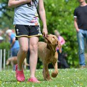 Seminar mit Dr. Esther Schalke: Methodentraining für Hundetrainer