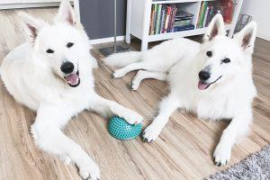 Lisas blog Hundetrainer werden - Nachahmung