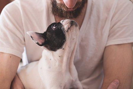 Nonverbale Kommunikation mit Hunden: ein Vortrag
