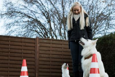 Praxis-Hundetraining
