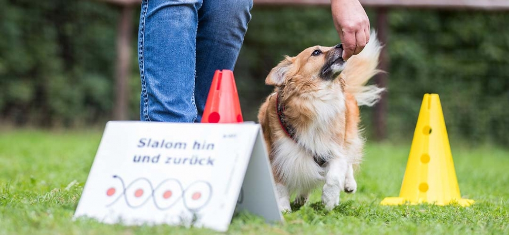 Rally Obedience - Hund mit Hlalter beim Durchlauf eines Parcours