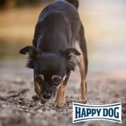 Anti-Giftköder Vortrag bei Happy Dog