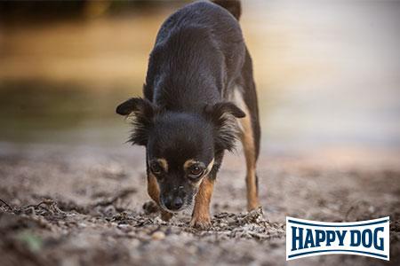 Vortrag bei Happy Dog: Anti-Giftköder