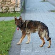 Sozialverhalten kognitive Fähigkeiten des Hundes - ein Workshop mit Dr. Juliane Kaminski