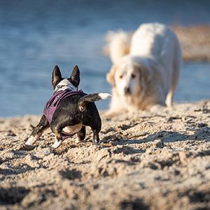Spielverhalten von Hunden (und Kindern) - Seminar bei Ziemer & Falke