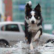 Seminar bei Ziemer & Falke: Stress, Nerven und Hormone: Einfluss auf Kommunikation von Mensch und Hund