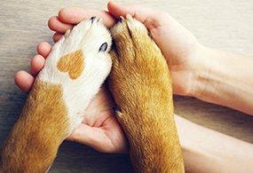 N.A.B. - ganzheitlicher Hundeverhaltenstrainer Aus- und Weitebrbildung