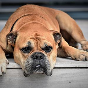Narben auf der Seele- Traumaarbeit mit Hunden