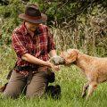 Apportieren als teamfördernde Maßnahme - typgerechte Auslastung für jagdlich motivierte Hunde